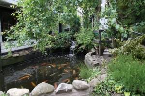pond-flish
